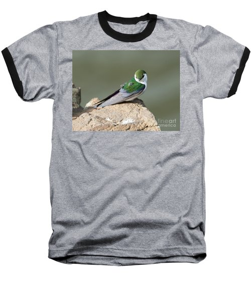 Violet-green Swallow Baseball T-Shirt by Mike Dawson