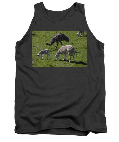 Emu And Sheep Tank Top by Garry Gay
