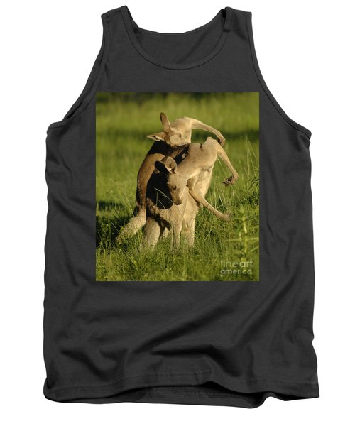 Kangaroos Taking A Bow Tank Top by Bob Christopher