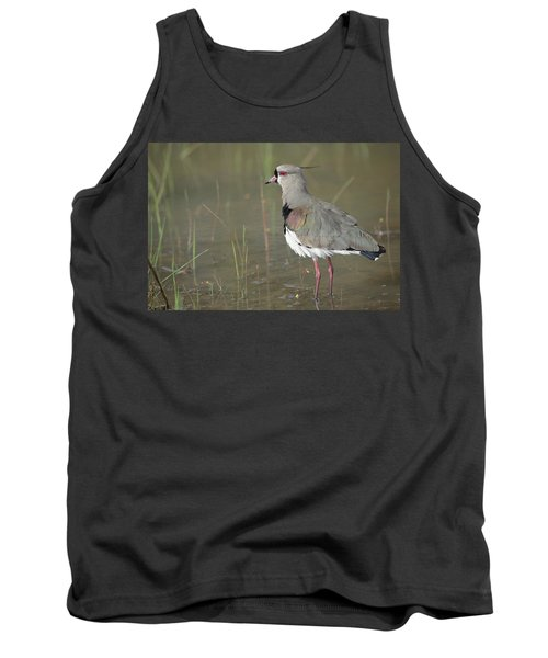 Southern Lapwing In Marshland Pantanal Tank Top by Tui De Roy