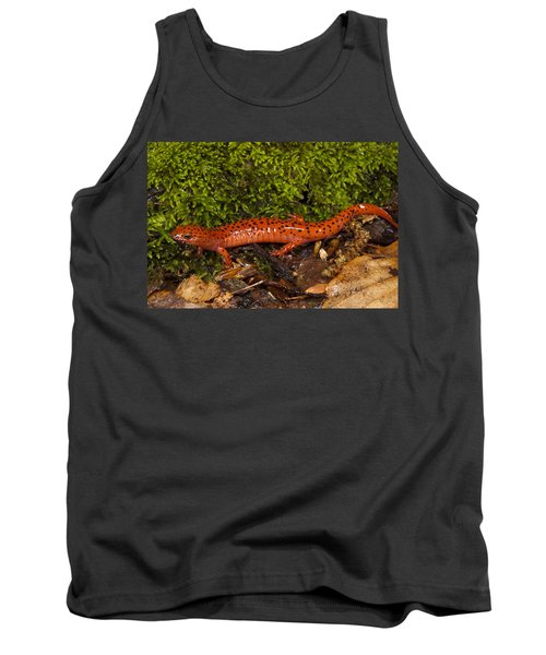 Red Salamander Pseudotriton Ruber Tank Top by Pete Oxford