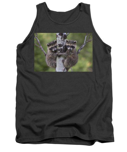 Raccoon Two Babies Climbing Tree North Tank Top by Tim Fitzharris