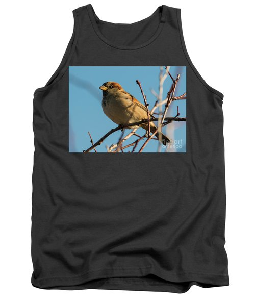 Female House Sparrow Tank Top by Mike Dawson