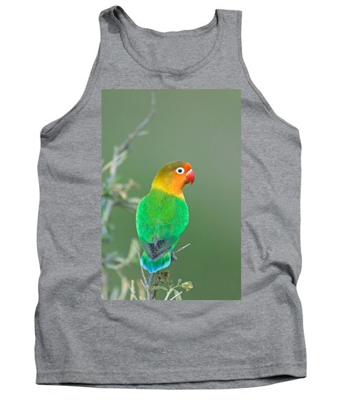Close-up Of A Fischers Lovebird Tank Top by Panoramic Images