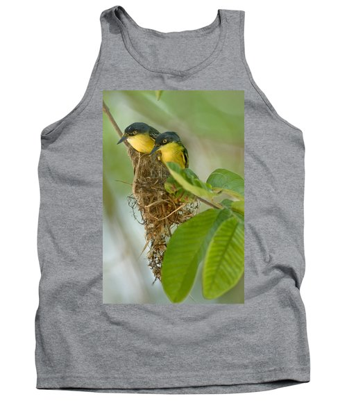 Close-up Of Two Common Tody-flycatchers Tank Top by Panoramic Images