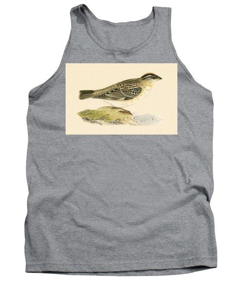 Rock Sparrow Tank Top by English School