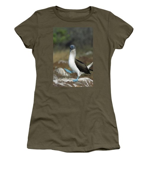 Blue-footed Booby Courtship Dance Women's T-Shirt (Junior Cut) by Tui De Roy