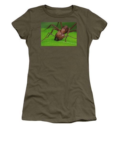 Leafcutter Ant Cutting Papaya Leaf Women's T-Shirt (Junior Cut) by Mark Moffett
