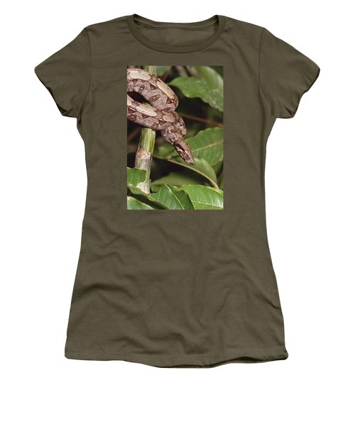 Boa Constrictor Coiled South America Women's T-Shirt (Junior Cut) by Gerry Ellis