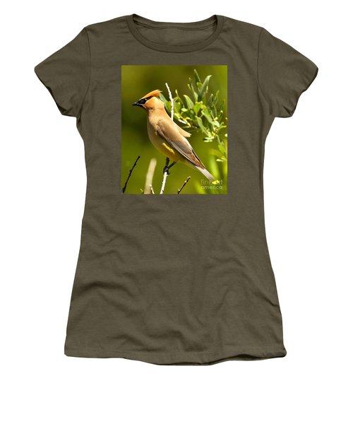 Cedar Waxwing Closeup Women's T-Shirt (Junior Cut) by Adam Jewell