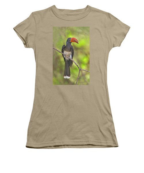 Crowned Hornbill Perching On A Branch Women's T-Shirt (Junior Cut) by Panoramic Images