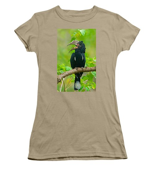 Silvery-cheeked Hornbill Perching Women's T-Shirt (Junior Cut) by Panoramic Images