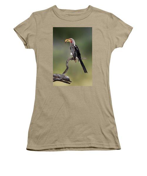 Southern Yellowbilled Hornbill Women's T-Shirt (Junior Cut) by Johan Swanepoel