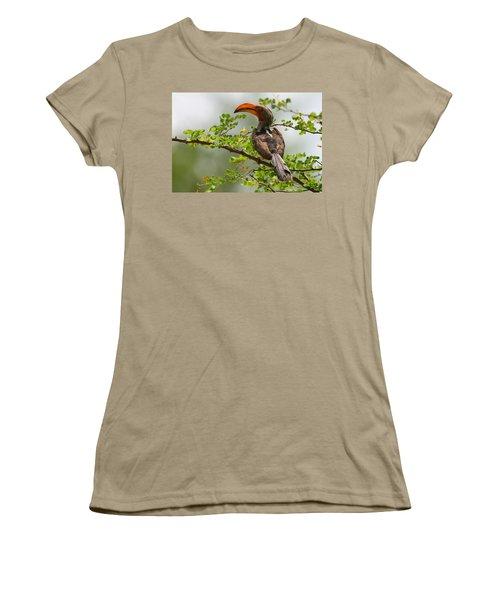 Yellow-billed Hornbill Women's T-Shirt (Junior Cut) by Bruce J Robinson