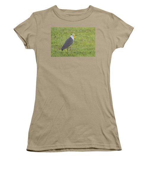 Masked Lapwing Women's T-Shirt (Junior Cut) by Douglas Barnard