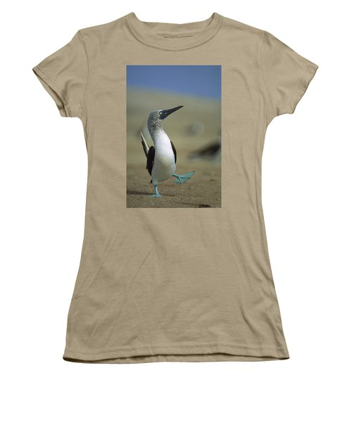 Blue-footed Booby Sula Nebouxii Women's T-Shirt (Junior Cut) by Tui De Roy