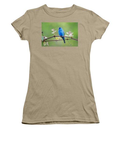 Indigo Bunting Perched Women's T-Shirt (Junior Cut) by Bill Wakeley