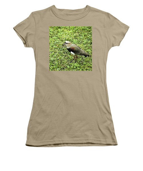 Southern Lapwing Women's T-Shirt (Junior Cut) by Norman Johnson