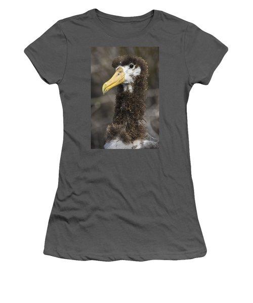 Waved Albatross Molting Juvenile Women's T-Shirt (Junior Cut) by Pete Oxford