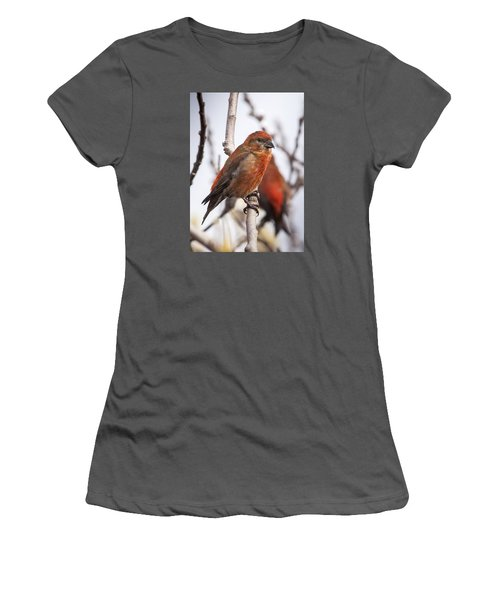 Male Red Crossbills Women's T-Shirt (Junior Cut) by Robert Potts