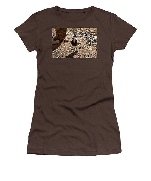 Banded Lapwing Women's T-Shirt (Junior Cut) by Douglas Barnard