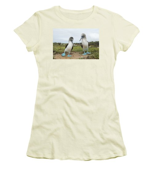 Blue-footed Booby Pair Courting Women's T-Shirt (Junior Cut) by Tui De Roy