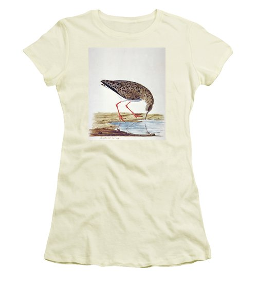 Curlew Sandpiper Women's T-Shirt (Junior Cut) by Charles Collins