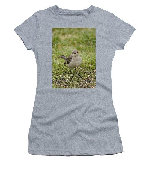 Northern Mockingbird Women's T-Shirt (Junior Cut) by Heather Applegate