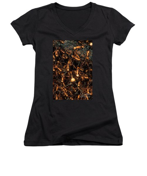 Army Ant Bivouac Site Women's V-Neck T-Shirt (Junior Cut) by Gregory G. Dimijian, M.D.