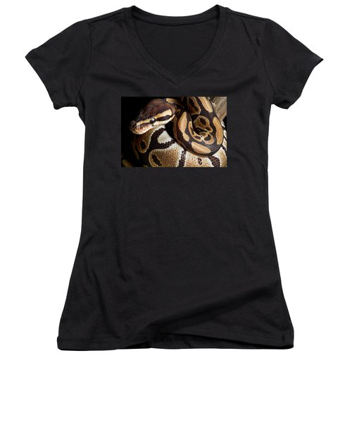 Ball Python Python Regius Women's V-Neck T-Shirt (Junior Cut) by David Kenny