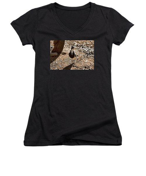Banded Lapwing Women's V-Neck T-Shirt (Junior Cut) by Douglas Barnard