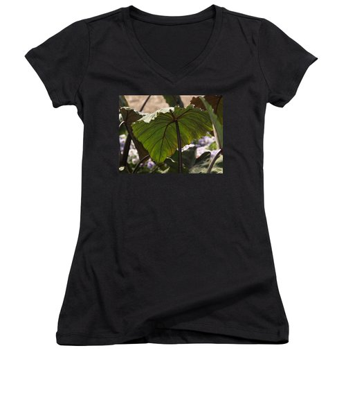 Elephant Ear Women's V-Neck T-Shirt (Junior Cut) by James Peterson