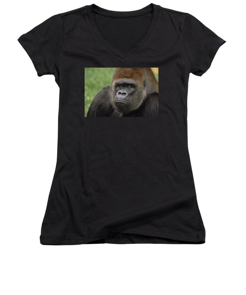 Western Lowland Gorilla Silverback Women's V-Neck T-Shirt (Junior Cut) by Gerry Ellis