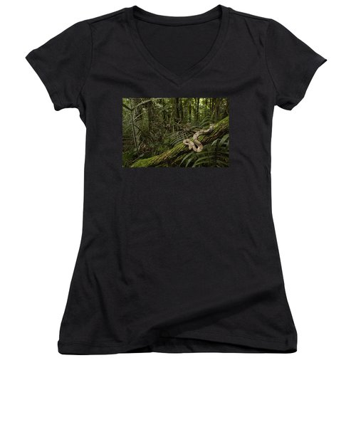 Boa Constrictor Boa Constrictor Coiled Women's V-Neck T-Shirt (Junior Cut) by Pete Oxford