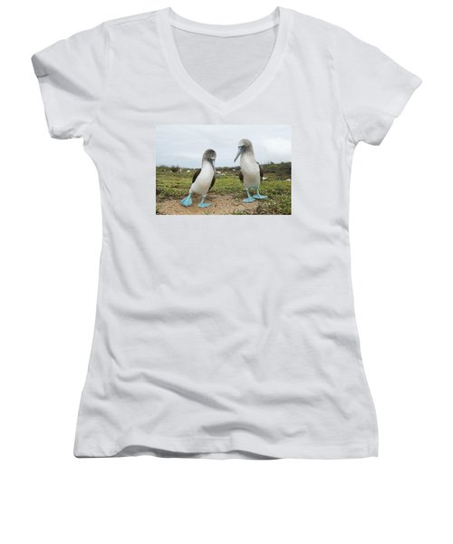 Blue-footed Booby Pair Courting Women's V-Neck T-Shirt (Junior Cut) by Tui De Roy