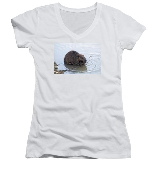 Beaver Chewing On Twig Women's V-Neck T-Shirt (Junior Cut) by Chris Flees