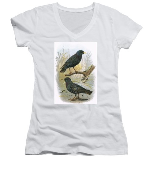 Common Starling Top And Intermediate Starling Bottom Women's V-Neck T-Shirt (Junior Cut) by English School