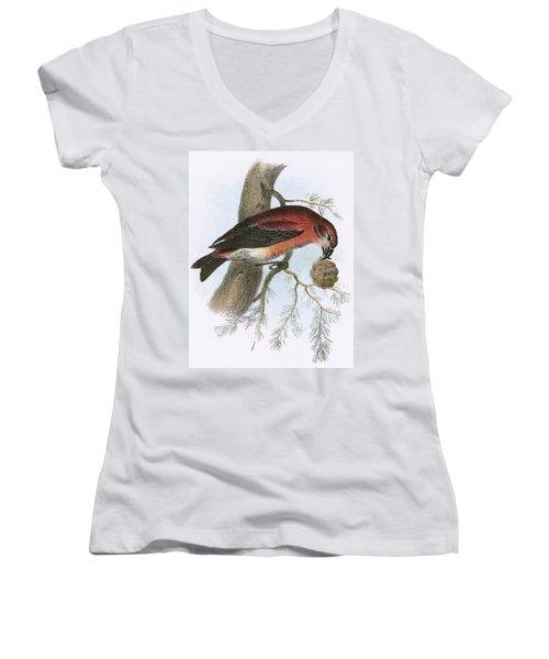 Crossbill Women's V-Neck T-Shirt (Junior Cut) by English School