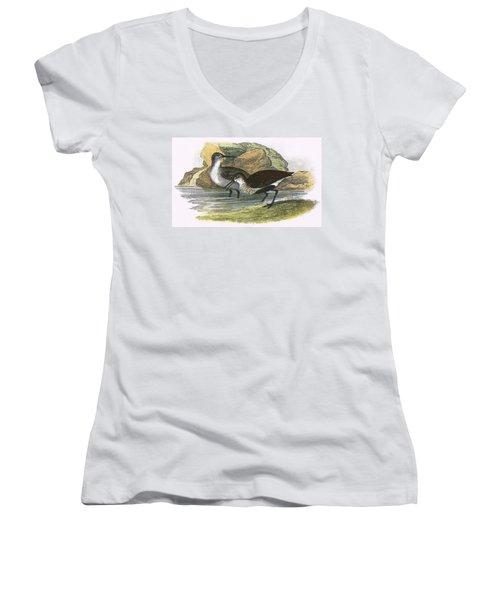 Dunlin Women's V-Neck T-Shirt (Junior Cut) by English School