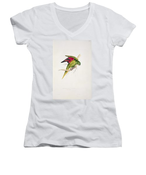 Matons Parakeet Women's V-Neck T-Shirt (Junior Cut) by Edward Lear