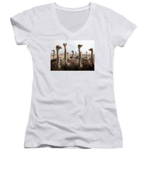 Ostrich Heads Women's V-Neck T-Shirt (Junior Cut) by Johan Swanepoel