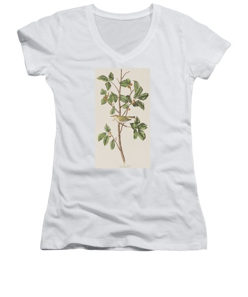 Tennessee Warbler Women's V-Neck T-Shirt (Junior Cut) by John James Audubon