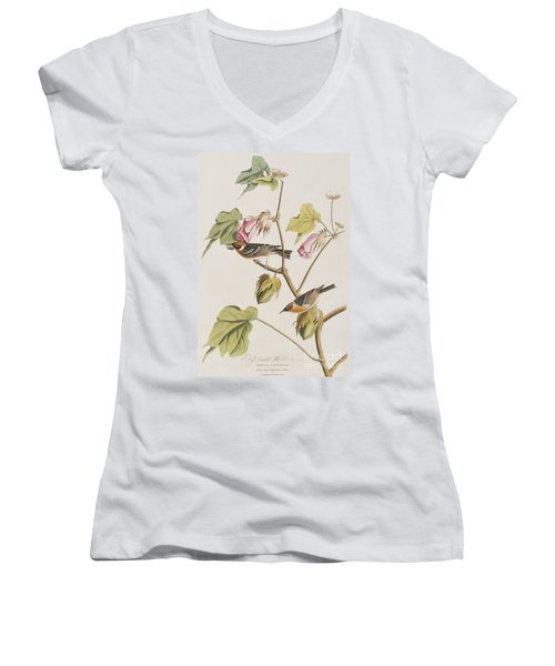 Bay Breasted Warbler Women's V-Neck T-Shirt (Junior Cut) by John James Audubon