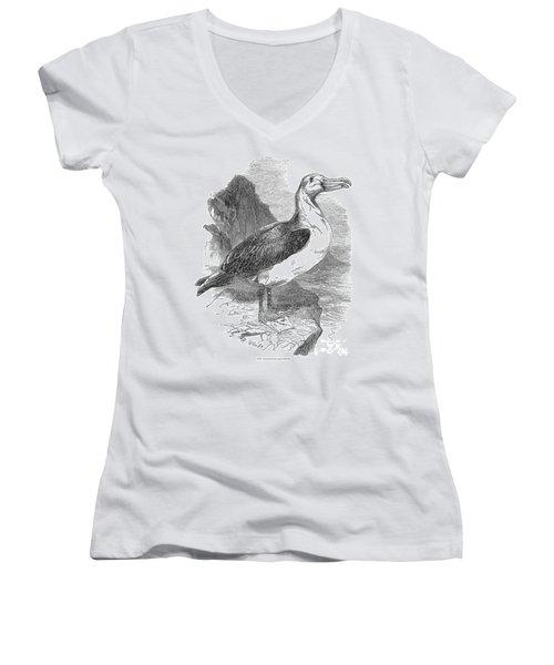 Albatross Women's V-Neck T-Shirt (Junior Cut) by Granger