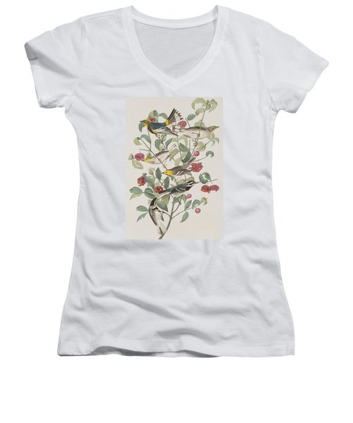 Audubons Warbler Hermit Warbler Black-throated Gray Warbler Women's V-Neck T-Shirt (Junior Cut) by John James Audubon