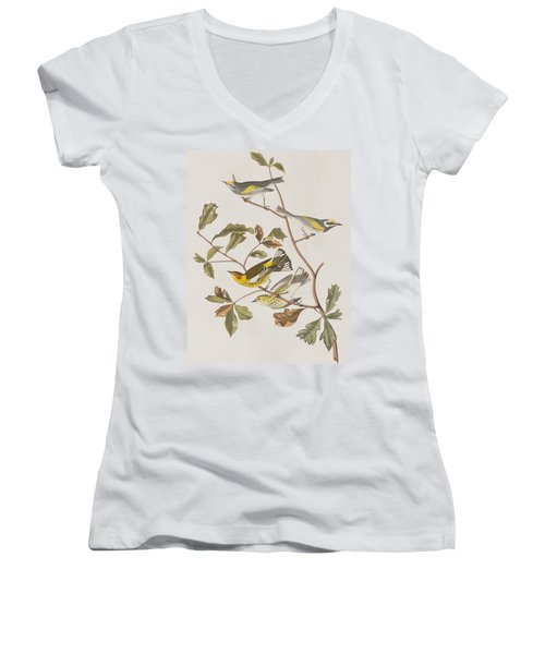 Golden Winged Warbler Or Cape May Warbler Women's V-Neck T-Shirt (Junior Cut) by John James Audubon