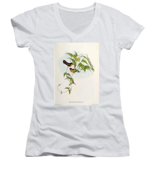 Leucippus Fallax Women's V-Neck T-Shirt (Junior Cut) by John Gould