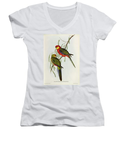 Platycercus Icterotis Women's V-Neck T-Shirt (Junior Cut) by John Gould