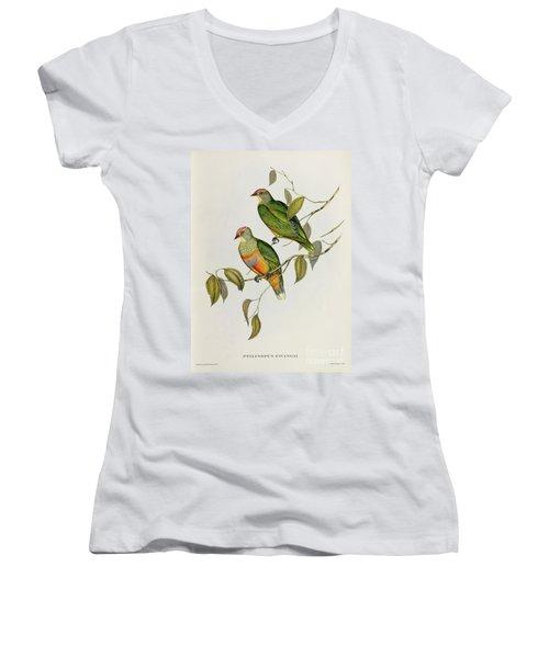 Ptilinopus Ewingii Women's V-Neck T-Shirt (Junior Cut) by John Gould