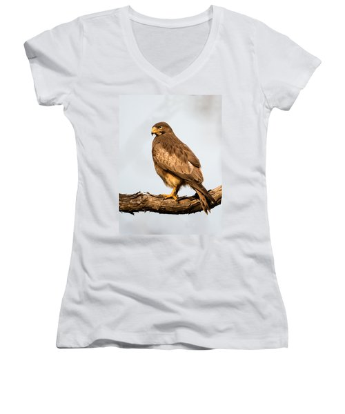 White-eyed Buzzard Butastur Teesa Women's V-Neck T-Shirt (Junior Cut) by Panoramic Images